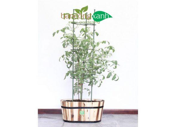 Khung chống đỡ Cà chua,cà tím, cây ăn trái, hoa thân mềm cao