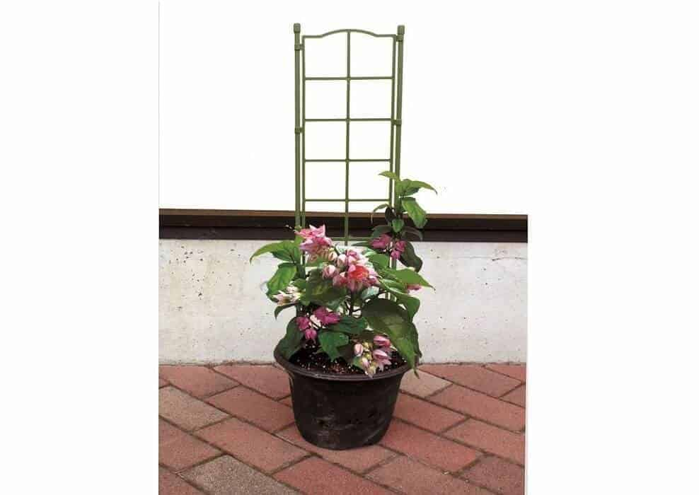 Khung trồng hoa leo cao 75cm loại đơn