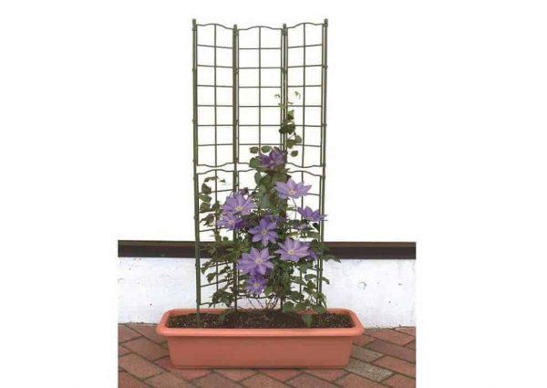 Khung trồng hoa leo
