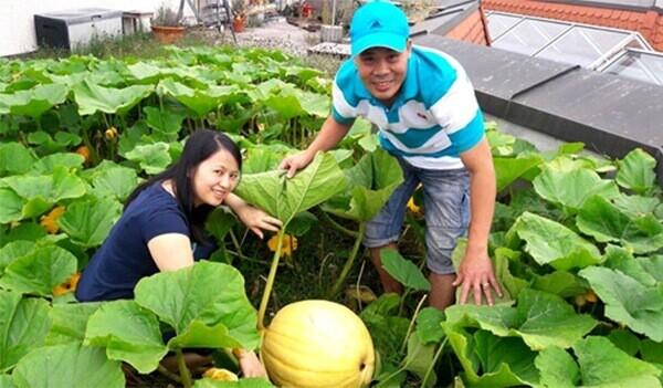 Ngắm khu vườn sân thượng trĩu trái ngon của vợ chồng Việt tại Đức