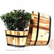 Chậu gỗ oval trồng cây cao cấp