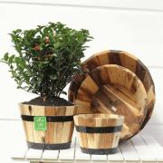 Chậu gỗ tròn trồng cây cao cấp