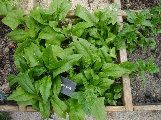 Các loại rau củ vừa đẹp vừa ngon-lý tưởng khi nằm trong vườn nhà
