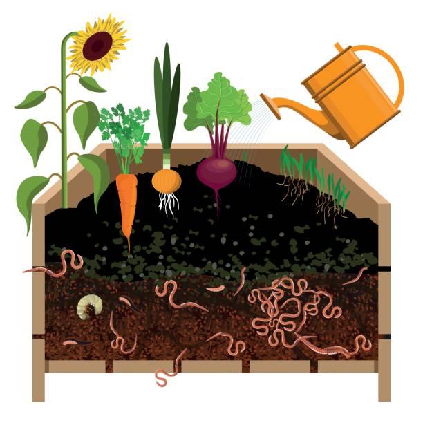 Lý do nên dùng phân hữu cơ, phân vi sinh