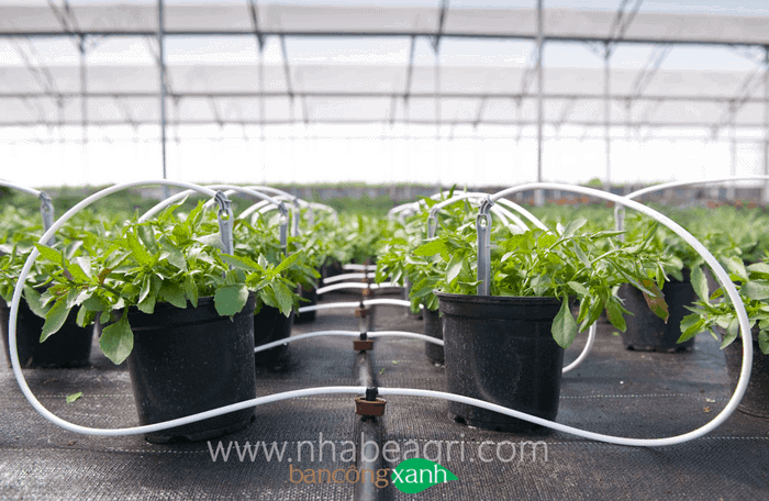 tưới nhỏ giọt cho cây trồng túi-bịch-chậu