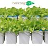 Trọn bộ hệ thống trồng cây thuỷ canh tĩnh Growbox Leafy-trồng rau ăn lá