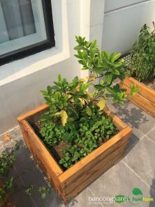 Chậu gỗ trồng cây cao cấp Famifarm Simple Box hình vuông ( SB444)