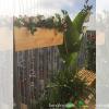 Chậu gỗ treo Famifarm Window1 box WB522