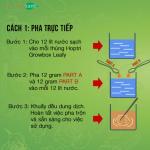 Hướng dẫn trồng rau thuỷ canh bằng hệ thống thuỷ canh tĩnh Hydro Leafy