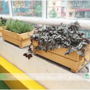 Chậu gổ hình chữ nhật trồng cây, rau cao cấp cấp