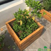 Chậu gỗ trồng cây cao cấp 01