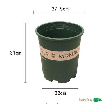 Chậu nhựa trồng cây Monrovia size 5