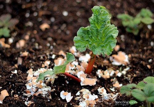 Một số biện pháp đuổi sâu bọ cho vườn nhà phố đơn giản