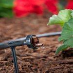 Tưới nhỏ giọt cho cây trồng trong vườn