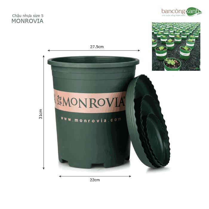 Chậu nhựa trồng cây cao cấp Monrovia size 5