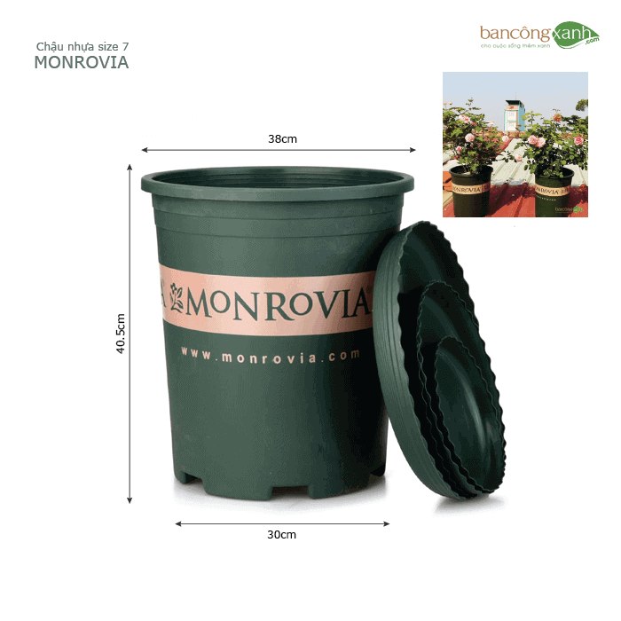 Chậu nhựa trồng cây cao cấp Monrovia size 7