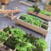 Chậu gỗ trồng cây cao cấp Famifarm SFG96028-thùng gỗ lớn làm vườn