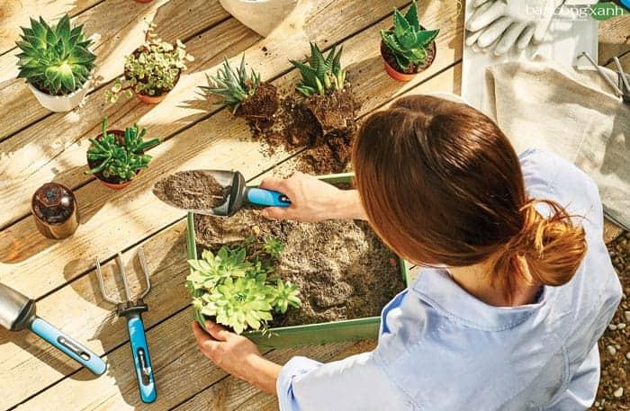 Gói khuyến mãi hỗ trợ làm vườn cùng Ban công xanh
