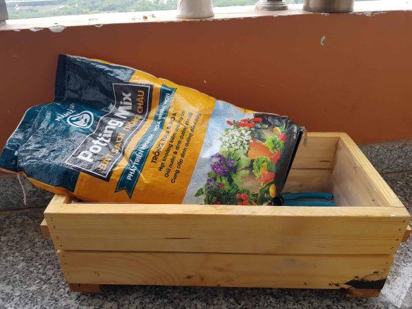 Hướng dẫn trồng hoa đồng tiền: chuẩn bị đất & khay trồng