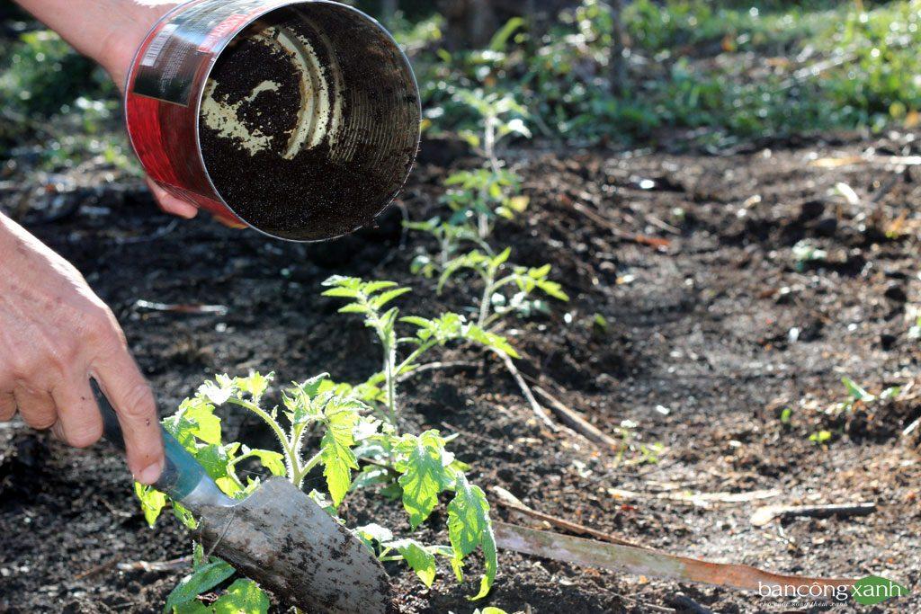 Những lưu ý khi sử dụng phân trùn quế, dịch trùn quế