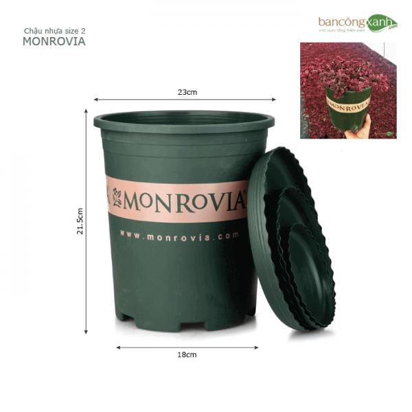 Chậu nhựa trồng cây monrovia size 2
