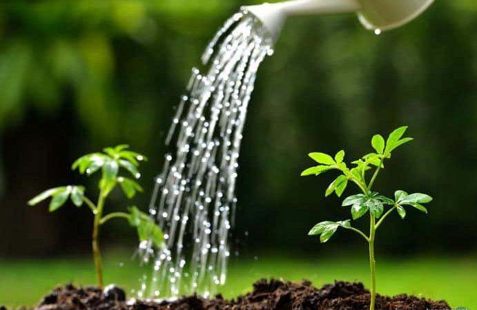 Tưới nước đúng cách cho vườn nhà-tưới khi nào và tưới bao nhiêu?