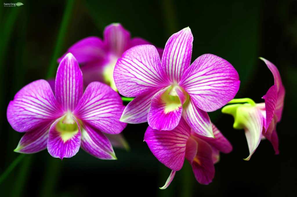 5 Giống-hoa-lan-phổ-biến-giúp-tô-điểm-khu-vườn-nhà-bạn