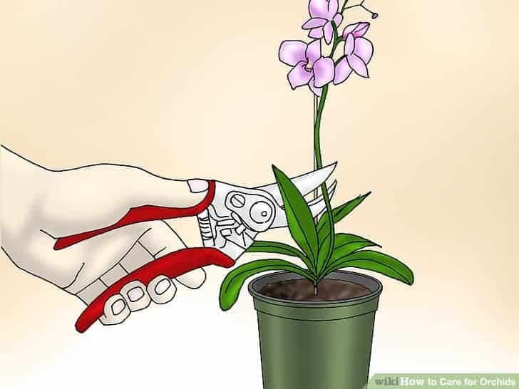 Cắt tỉa hoa lan