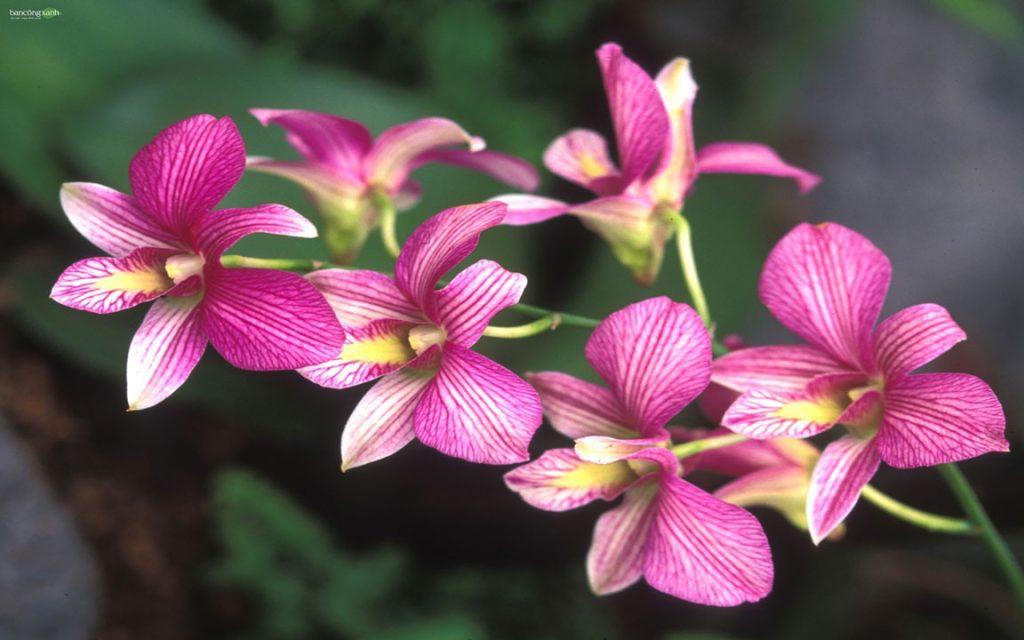 Những điều cần biết khi trồng hoa lan phần 1-yêu cầu ánh sáng, nhiệt độ, độ ẩm của hoa lan