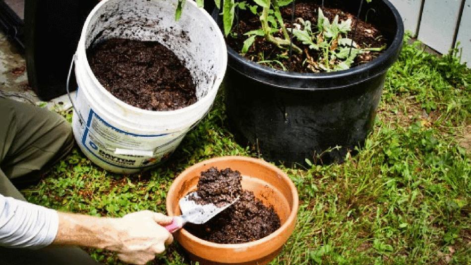 Tự làm phân bón cho thực vật và cây cảnh trong vườn nhà-5