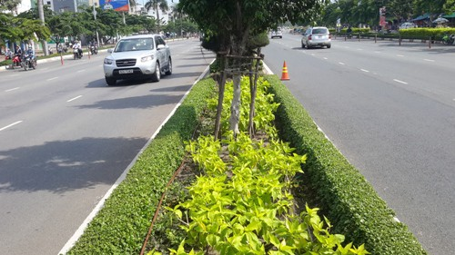 tưới lươn đường, giải phân cách, hàng rào cảnh quan