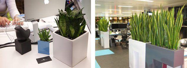 Trồng cây xanh văn phòng có những lợi ích gì-
