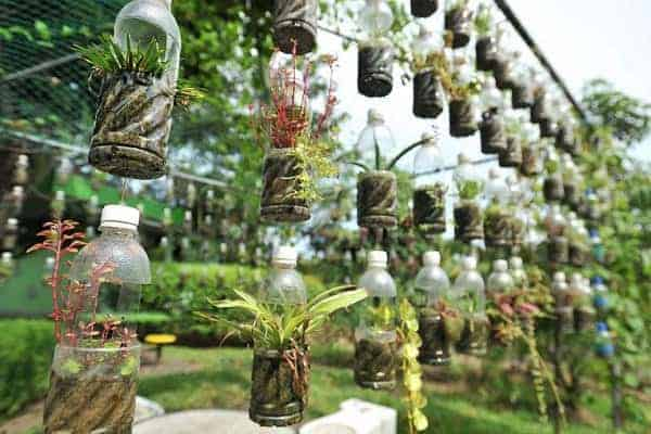 cách làm chậu tái chế từ chai nhựa