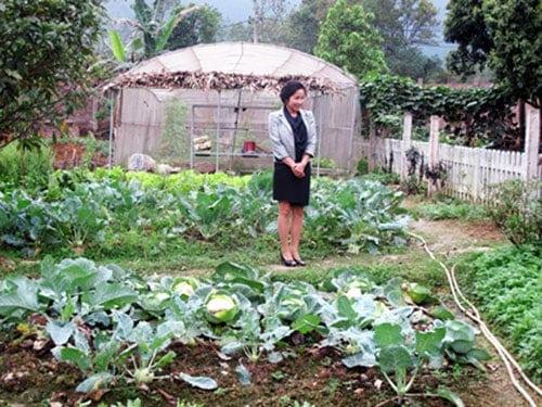 Vườn rau sạch của Mỹ Linh