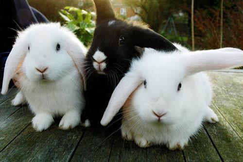 Sử dụng phân thỏ làm phân bón