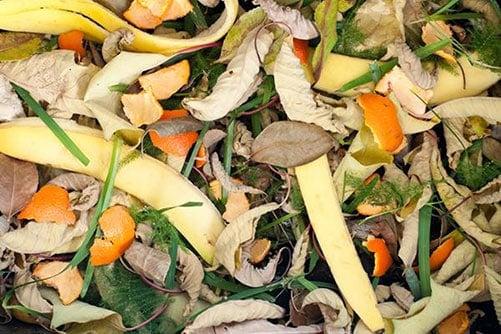 Bỏ vỏ chuối vào đống phân ủ