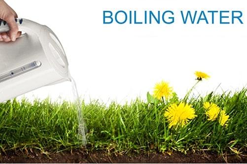 Sử dụng nước sôi để diệt cỏ dại