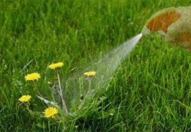 Thuốc diệt cỏ vô cơ và hữu cơ