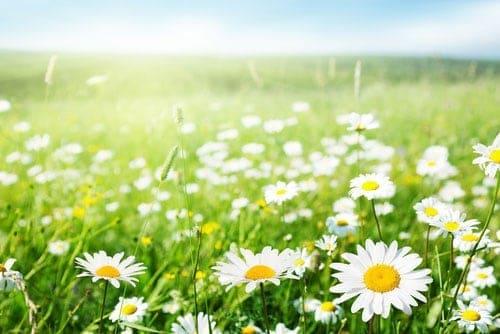 Vườn hoa đẹp sử dụng hệ thống tưới nhỏ giọt