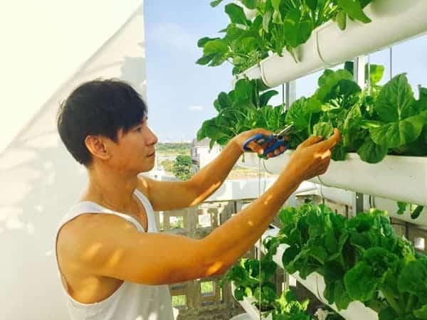 Chăm sóc vườn rau Lý Hải