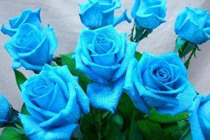 Giá thể phù hợp với hoa hồng