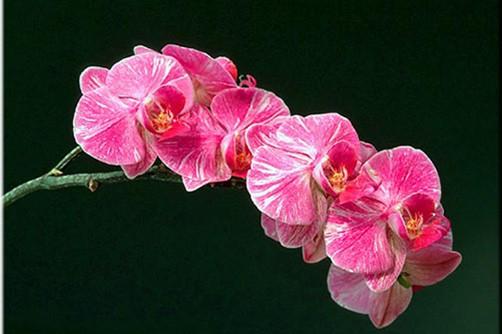 các cách trồng hoa lan