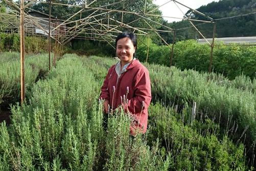 Vườn hoa oải hương của Tường Miên