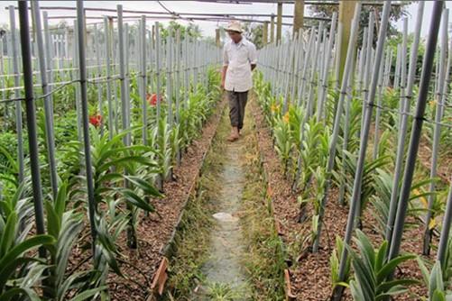 Phương pháp trồng lan theo luống