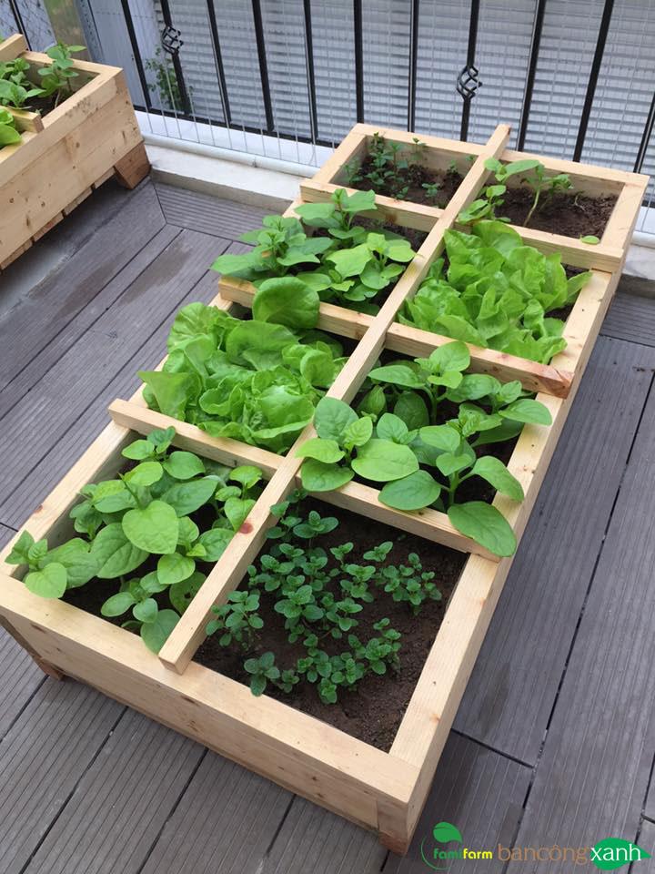 Chậu gỗ trồng rau