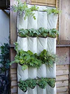 Chậu trồng cây dạng túi