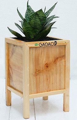Hộp gỗ trồng cây