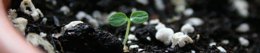 Đất và giá thể trồng cây