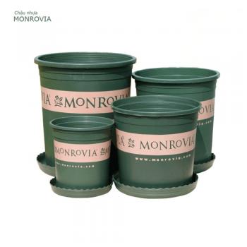 Chậu nhựa trồng cây Monrovia cao cấp