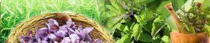 Hạt giống thảo mộc cao cấp